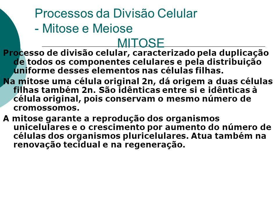 Processos da Divisão Celular - Mitose e Meiose MITOSE