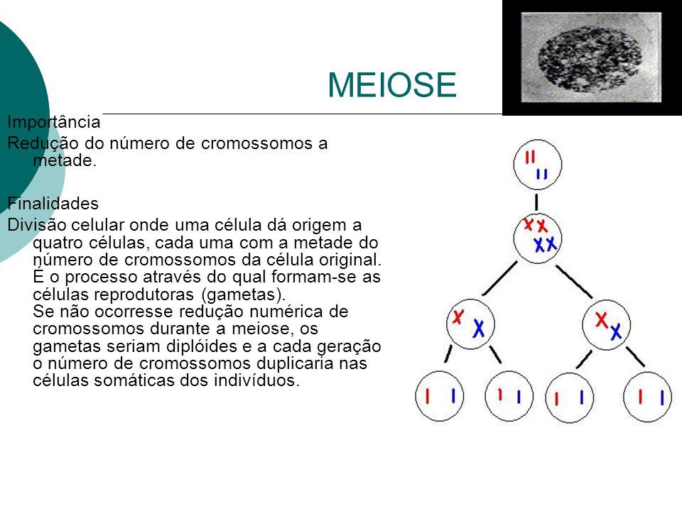 MEIOSE Importância Redução do número de cromossomos a metade.