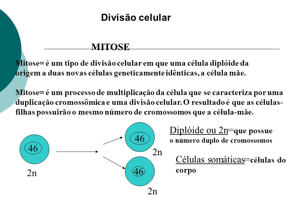 Diplóide ou 2n=que possue 46 46 2n Células somáticas=células do 2n 46