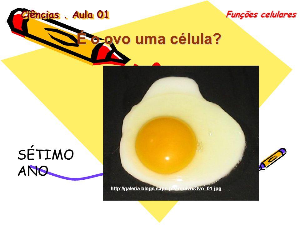 É o ovo uma célula SÉTIMO ANO Ciências . Aula 01 Funções celulares