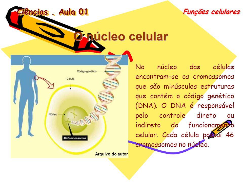 O núcleo celular Ciências . Aula 01 Funções celulares