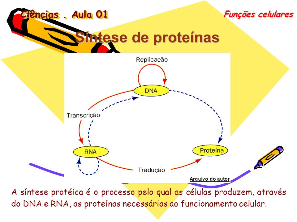 Síntese de proteínas Ciências . Aula 01 Funções celulares