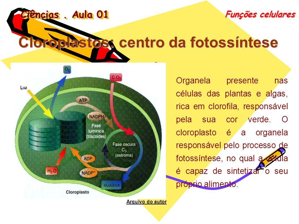 Cloroplastos: centro da fotossíntese