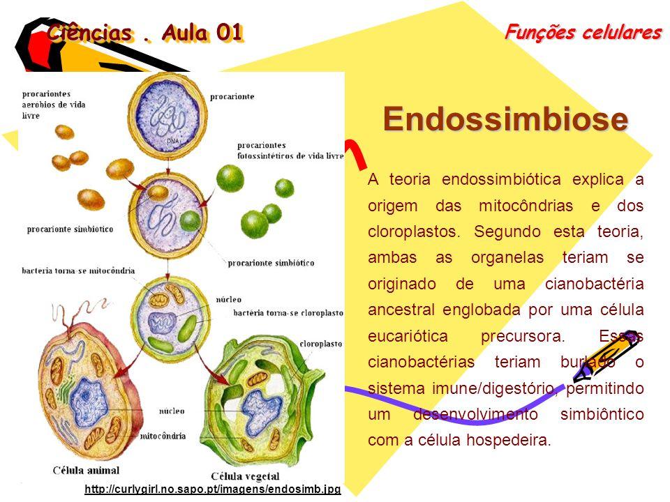 Endossimbiose Ciências . Aula 01 Funções celulares