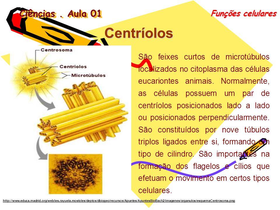 Centríolos Ciências . Aula 01 Funções celulares