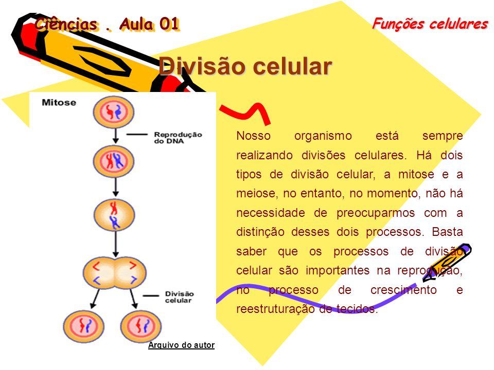 Divisão celular Ciências . Aula 01 Funções celulares