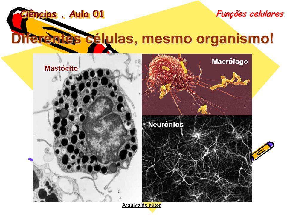 Diferentes células, mesmo organismo!