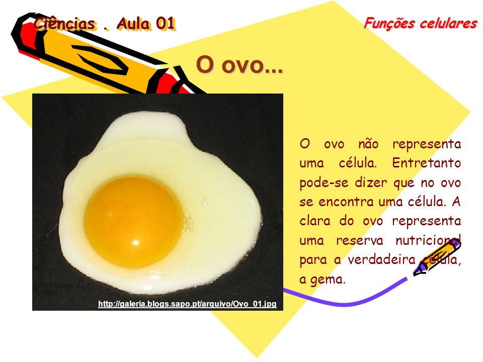 O ovo... Ciências . Aula 01 Funções celulares