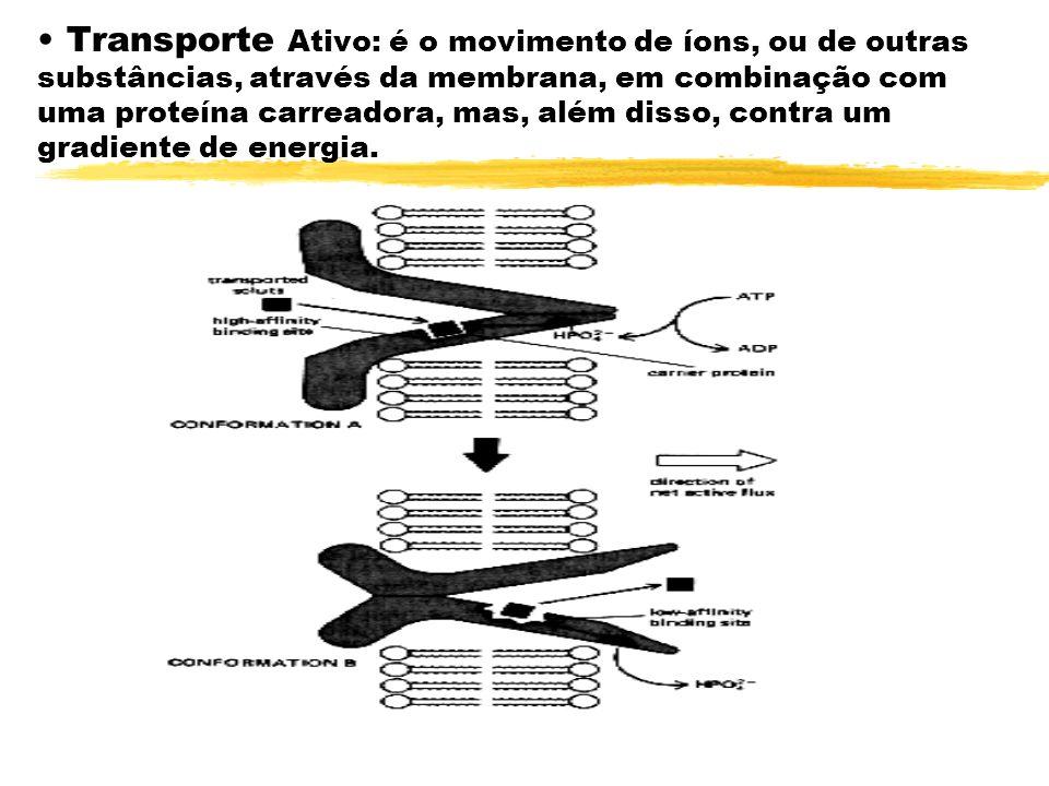 Transporte Ativo: é o movimento de íons, ou de outras substâncias, através da membrana, em combinação com uma proteína carreadora, mas, além disso, contra um gradiente de energia.