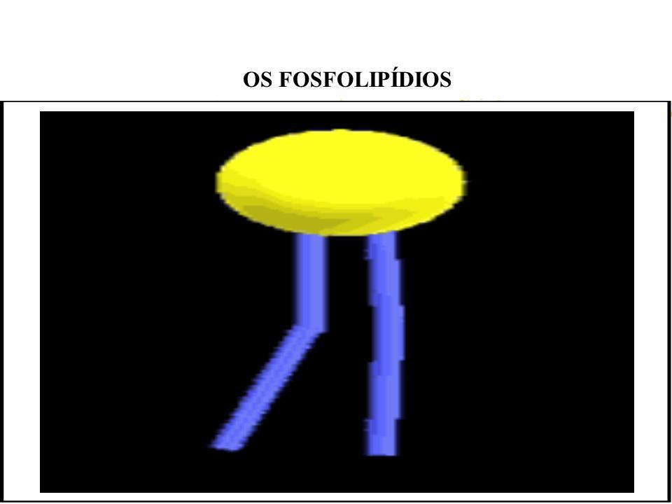 OS FOSFOLIPÍDIOS