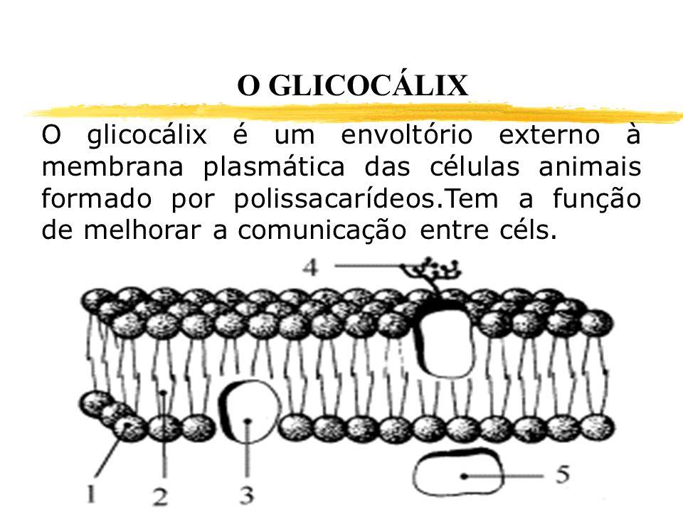 O GLICOCÁLIX