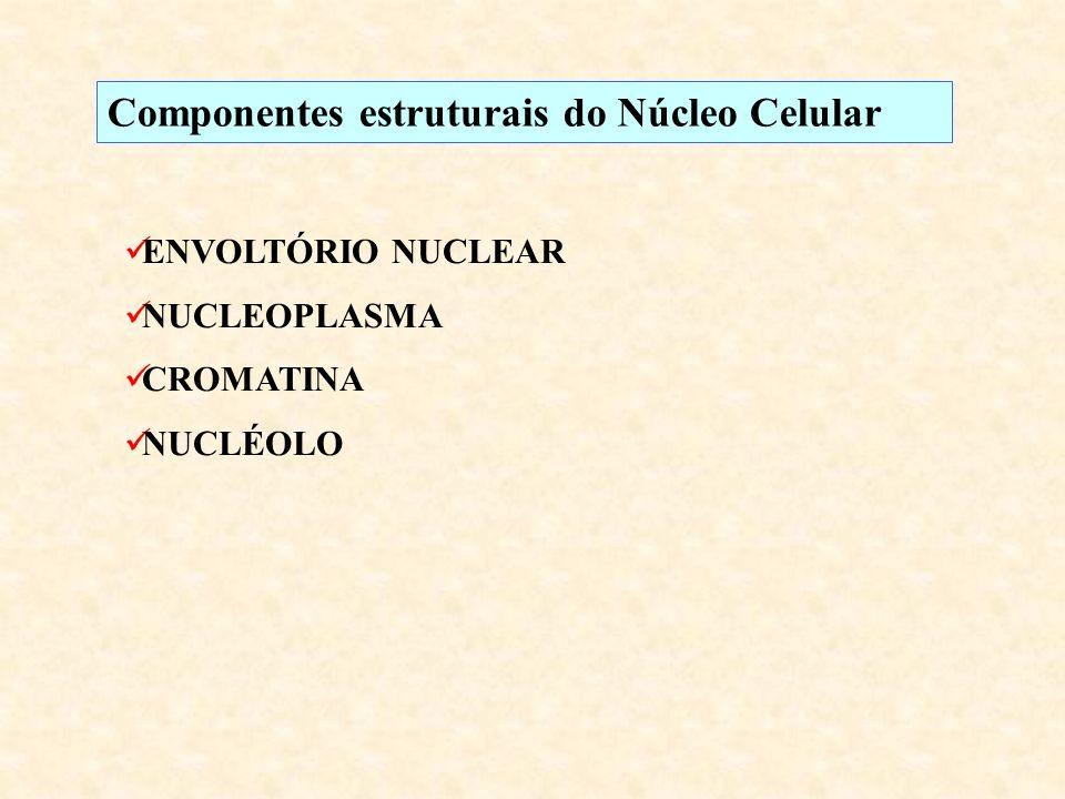 Componentes estruturais do Núcleo Celular