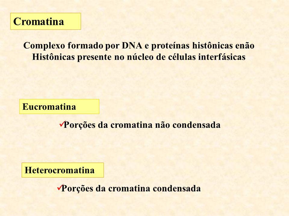 Cromatina Complexo formado por DNA e proteínas histônicas enão Histônicas presente no núcleo de células interfásicas.