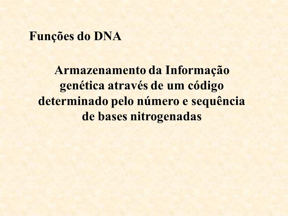 Funções do DNA Armazenamento da Informação genética através de um código determinado pelo número e sequência de bases nitrogenadas.