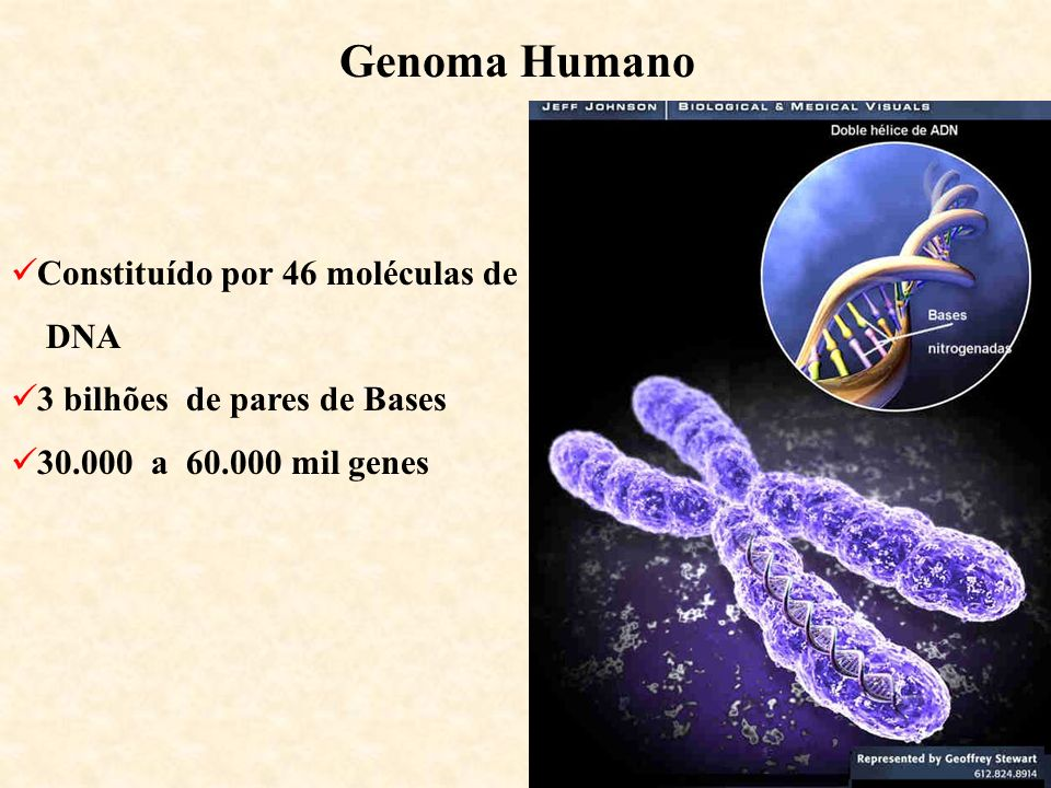 Genoma Humano Constituído por 46 moléculas de DNA