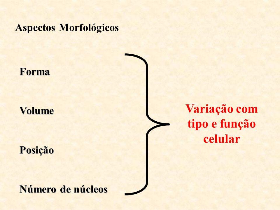 Variação com tipo e função celular