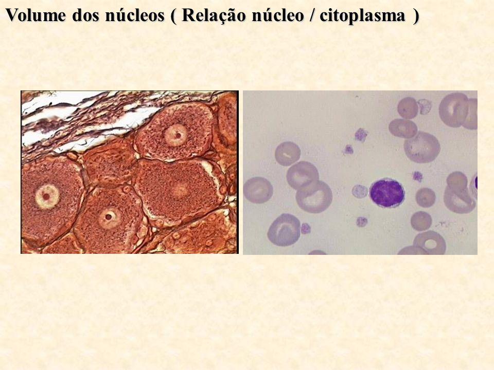 Volume dos núcleos ( Relação núcleo / citoplasma )