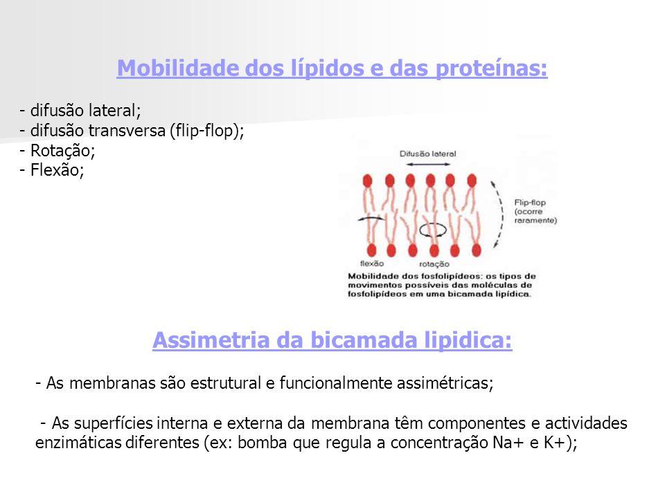 Mobilidade dos lípidos e das proteínas: