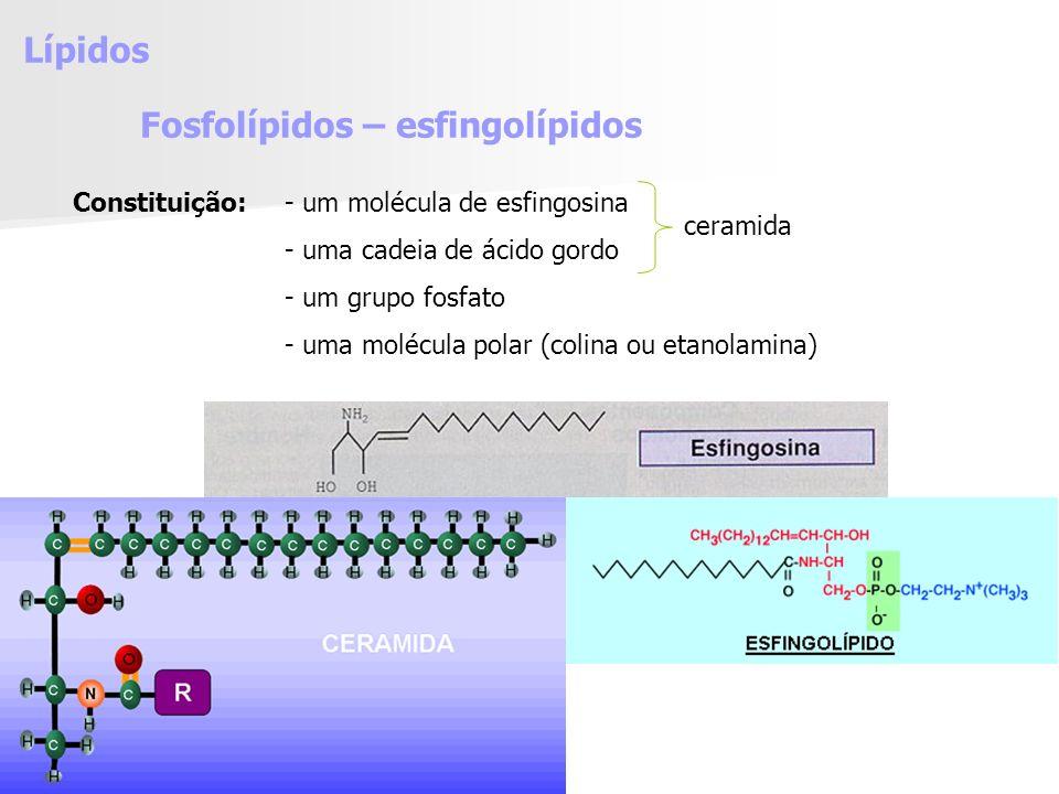 Fosfolípidos – esfingolípidos