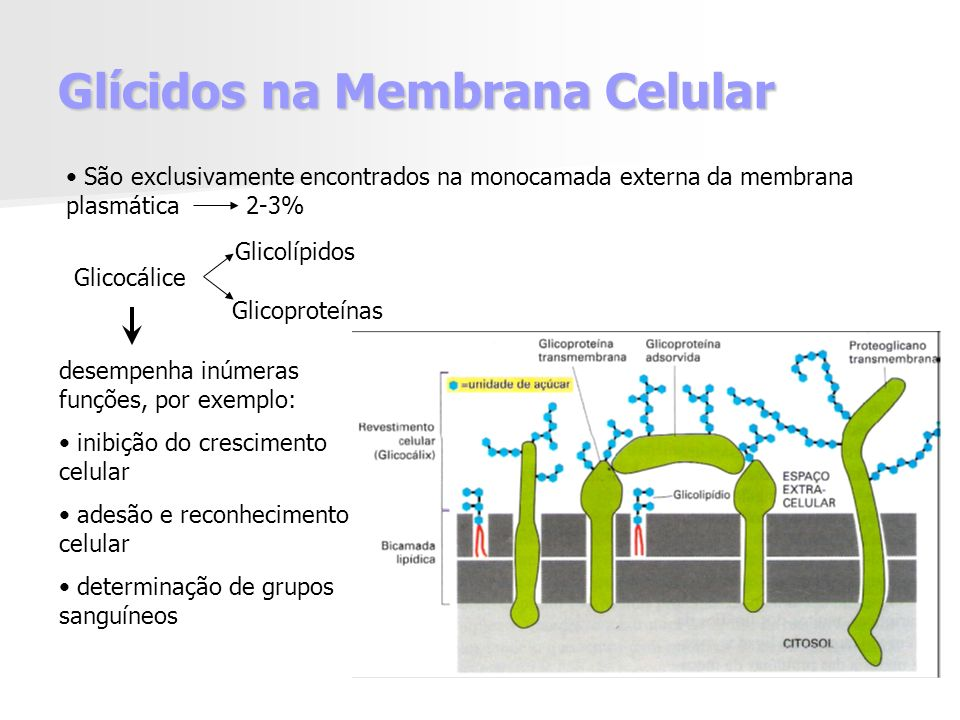 Glícidos na Membrana Celular