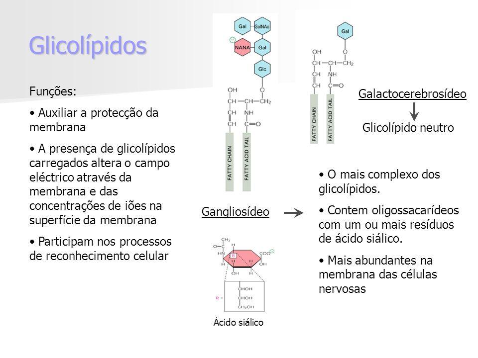Glicolípidos Funções: Galactocerebrosídeo