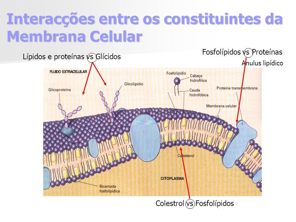 Interacções entre os constituintes da Membrana Celular