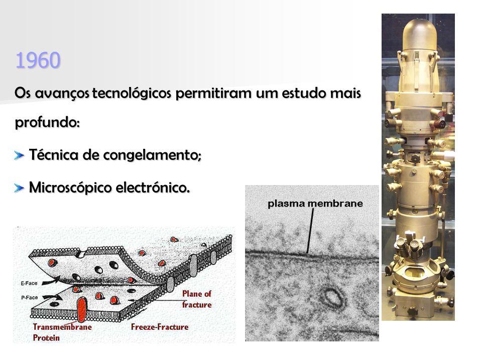 1960 Os avanços tecnológicos permitiram um estudo mais profundo: