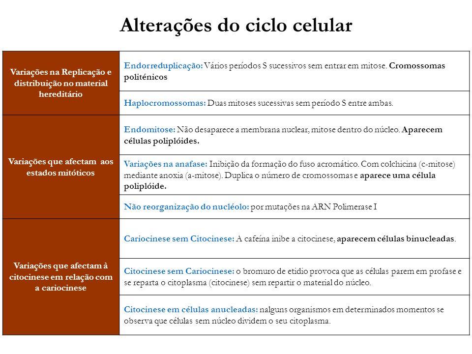 Alterações do ciclo celular