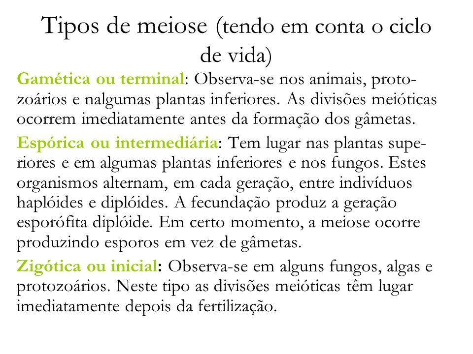 Tipos de meiose (tendo em conta o ciclo de vida)
