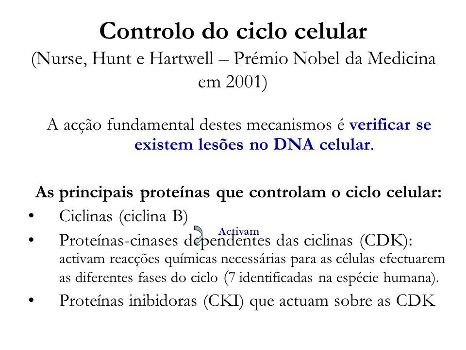 As principais proteínas que controlam o ciclo celular: