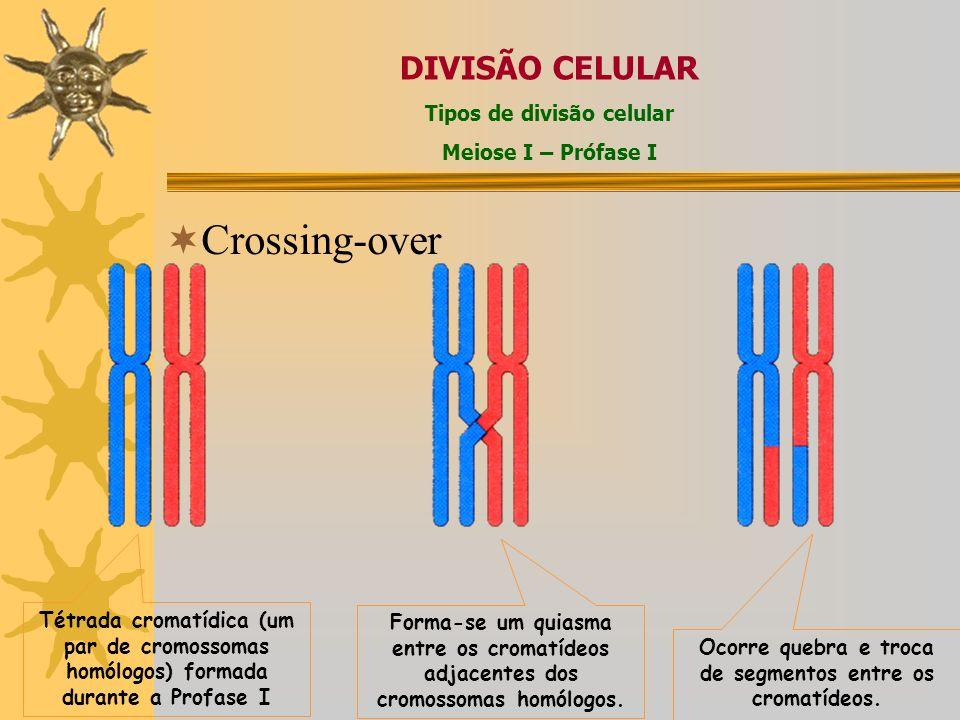 Crossing-over DIVISÃO CELULAR Tipos de divisão celular