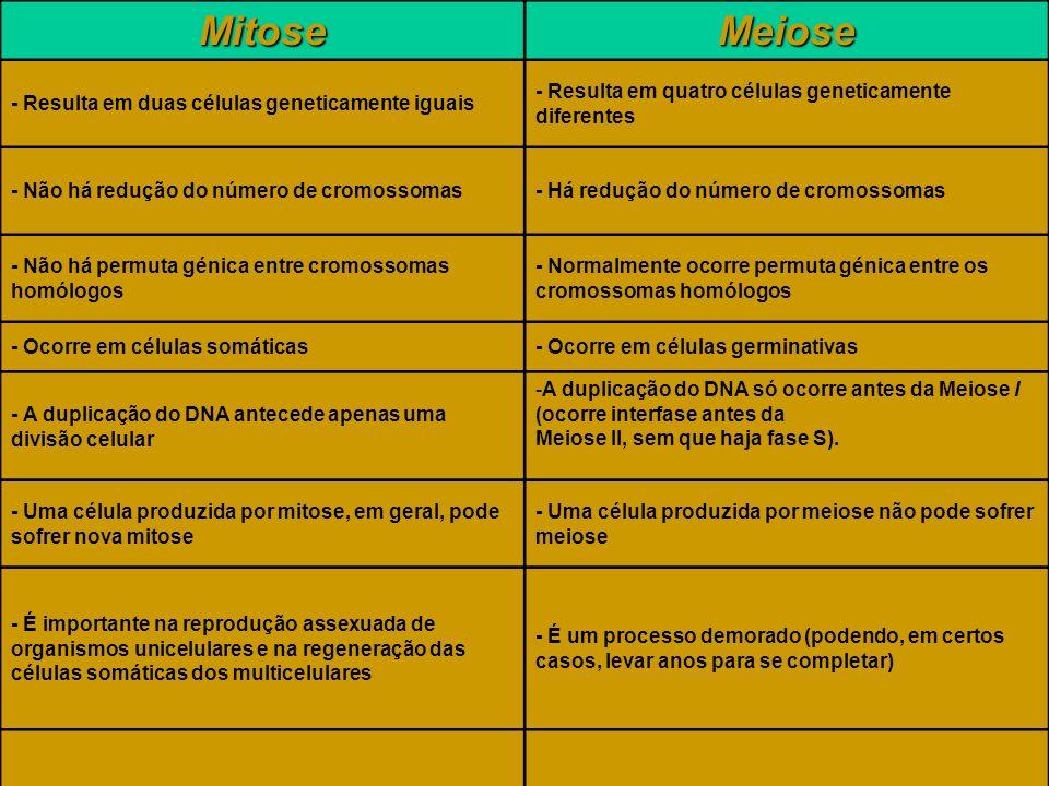 Mitose Meiose - Resulta em duas células geneticamente iguais