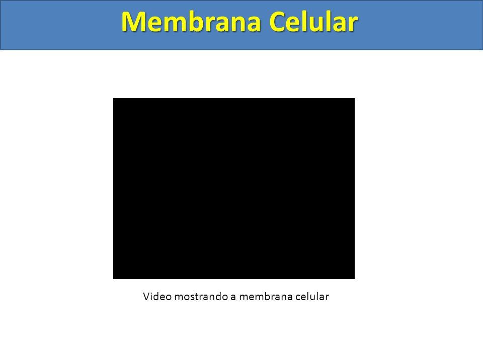 Video mostrando a membrana celular