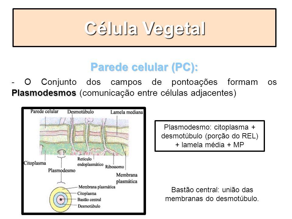 Bastão central: união das membranas do desmotúbulo.