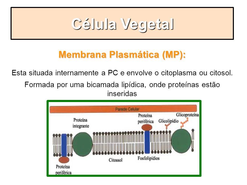 Membrana Plasmática (MP):