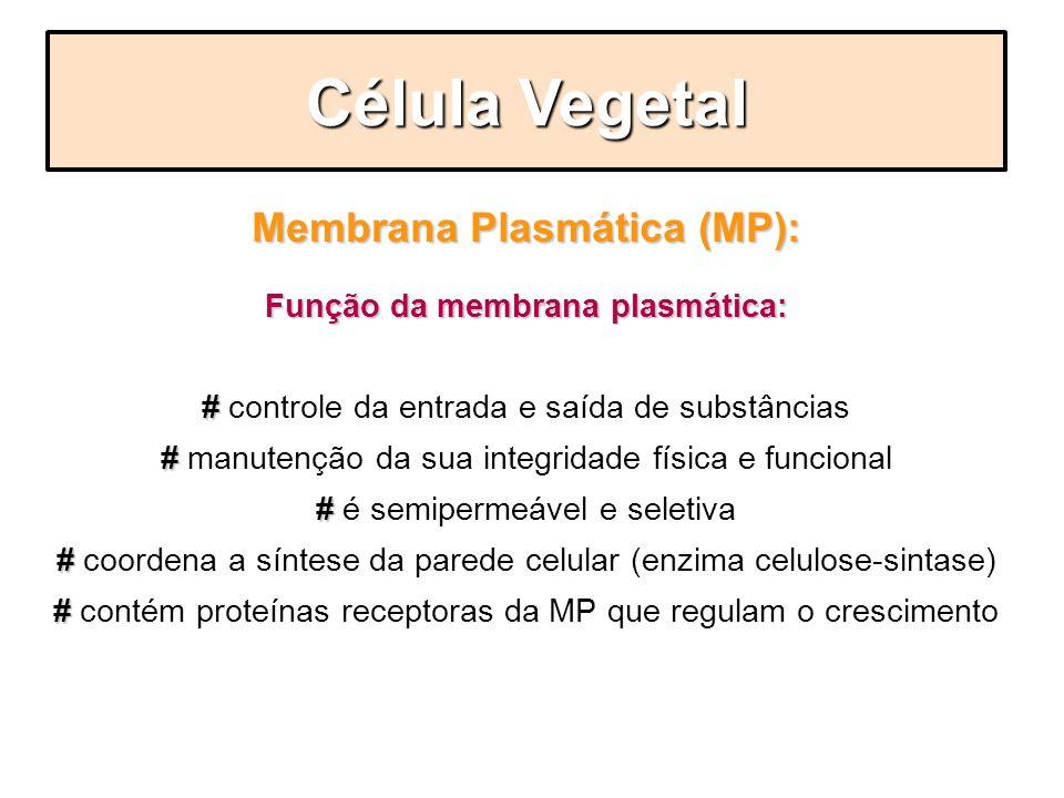 Membrana Plasmática (MP): Função da membrana plasmática: