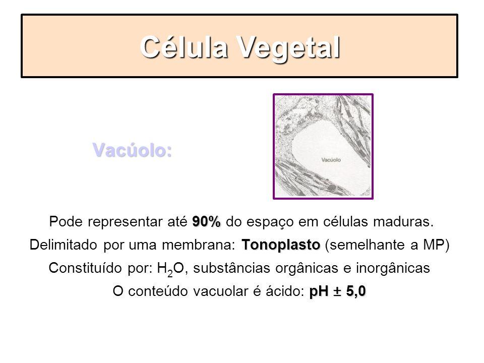 Célula Vegetal Vacúolo: