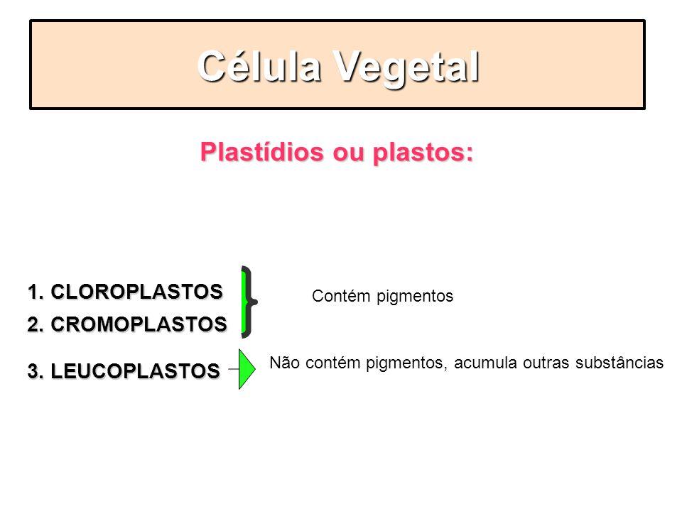 Plastídios ou plastos:
