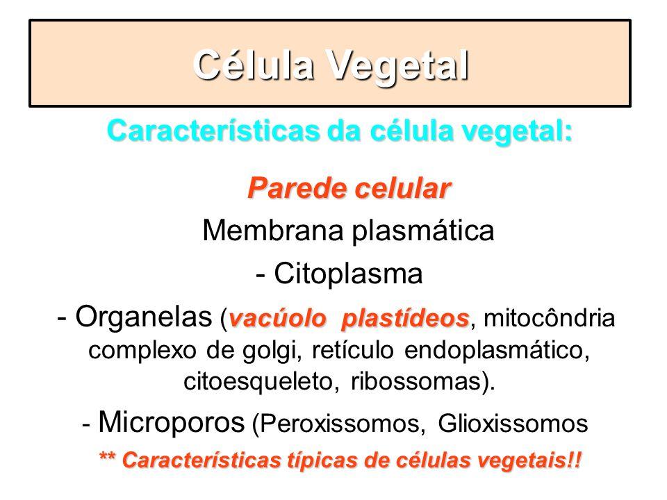Célula Vegetal Características da célula vegetal: - Parede celular