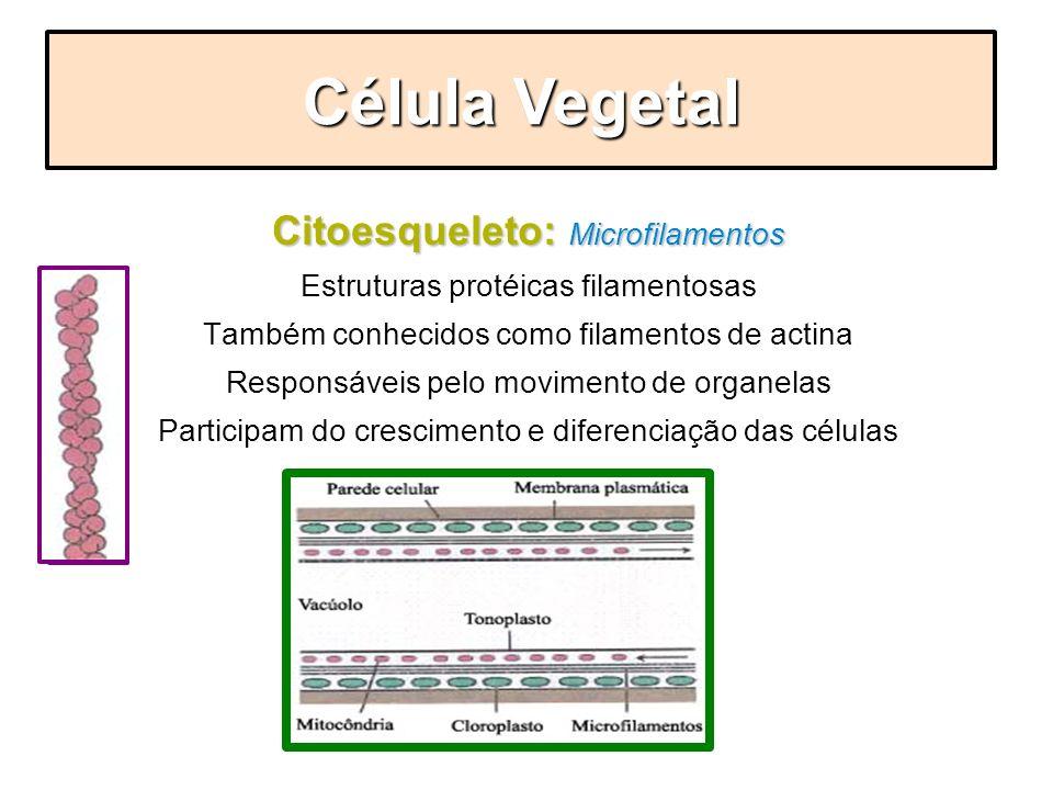 Célula Vegetal Citoesqueleto: Microfilamentos