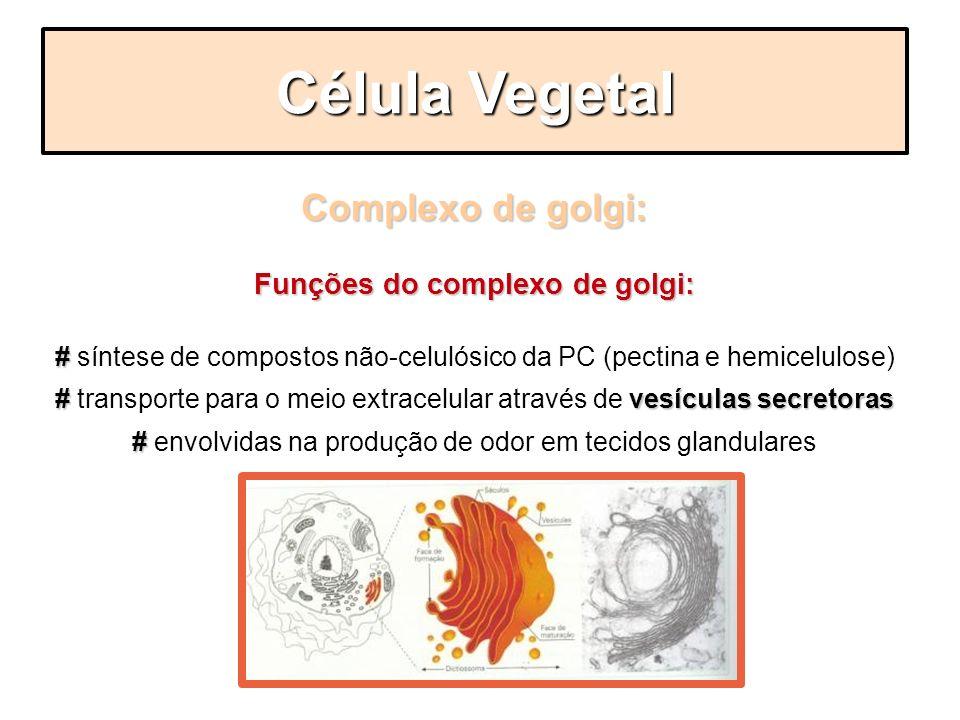 Funções do complexo de golgi: