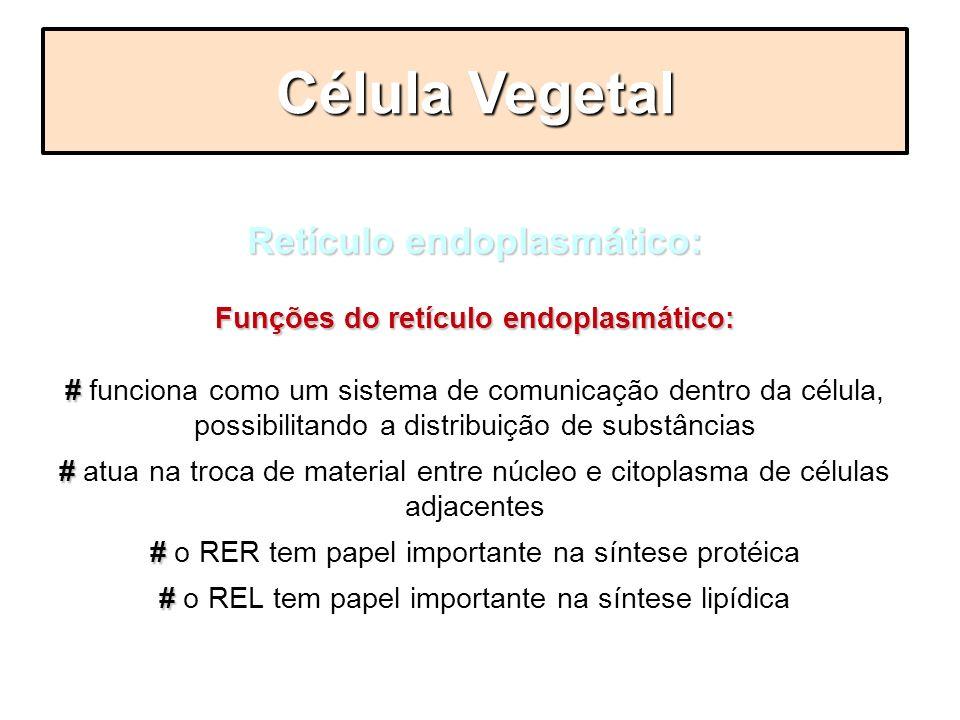 Retículo endoplasmático: Funções do retículo endoplasmático: