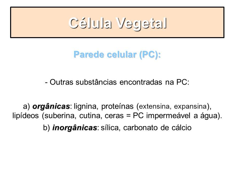 Célula Vegetal Parede celular (PC):