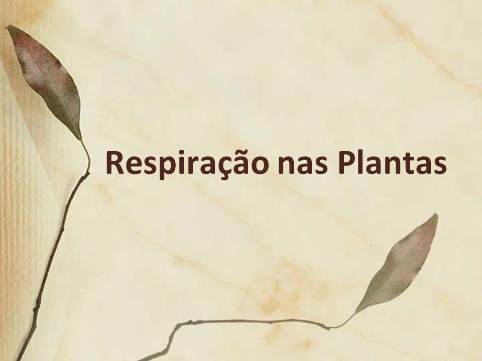Respiração nas Plantas