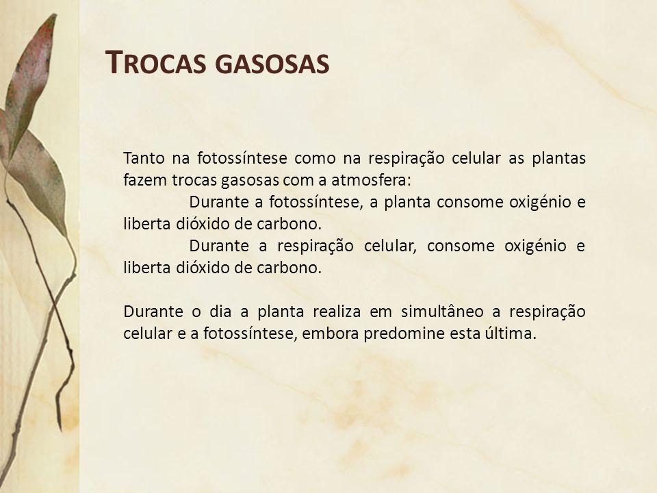 Trocas gasosas Tanto na fotossíntese como na respiração celular as plantas fazem trocas gasosas com a atmosfera: