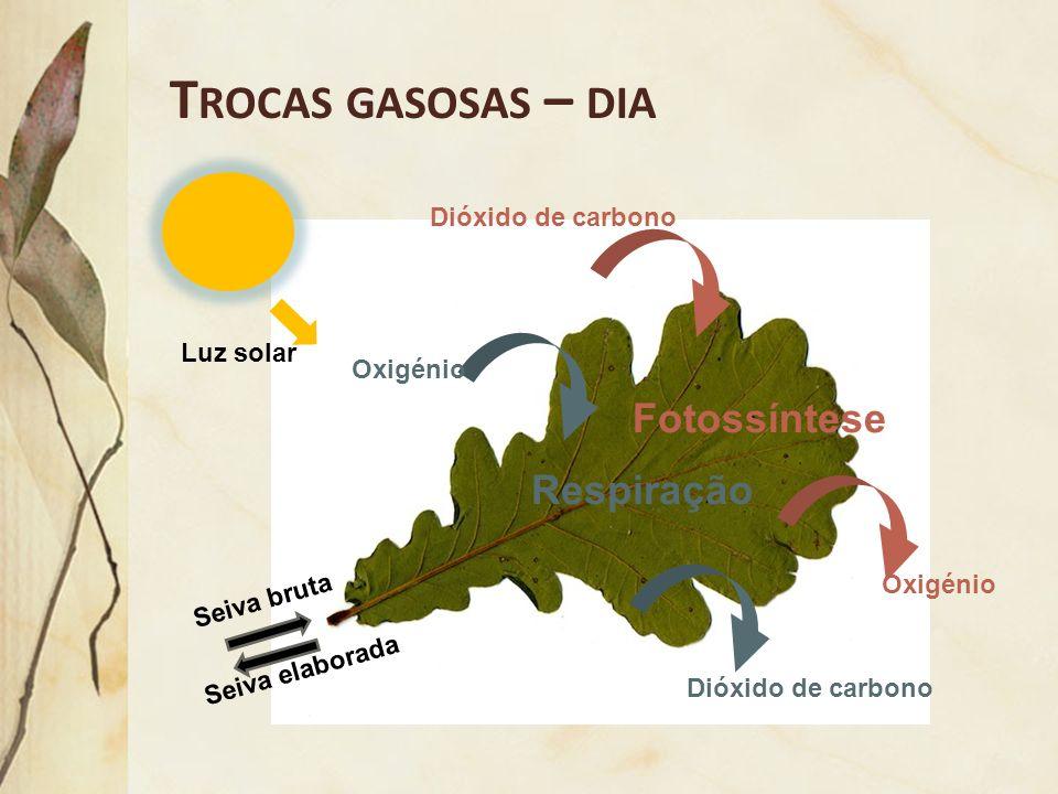 Trocas gasosas – dia Fotossíntese Respiração Dióxido de carbono
