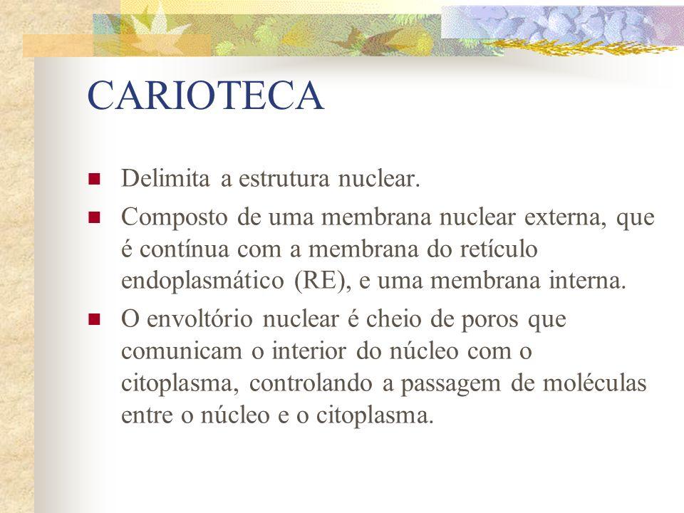 CARIOTECA Delimita a estrutura nuclear.