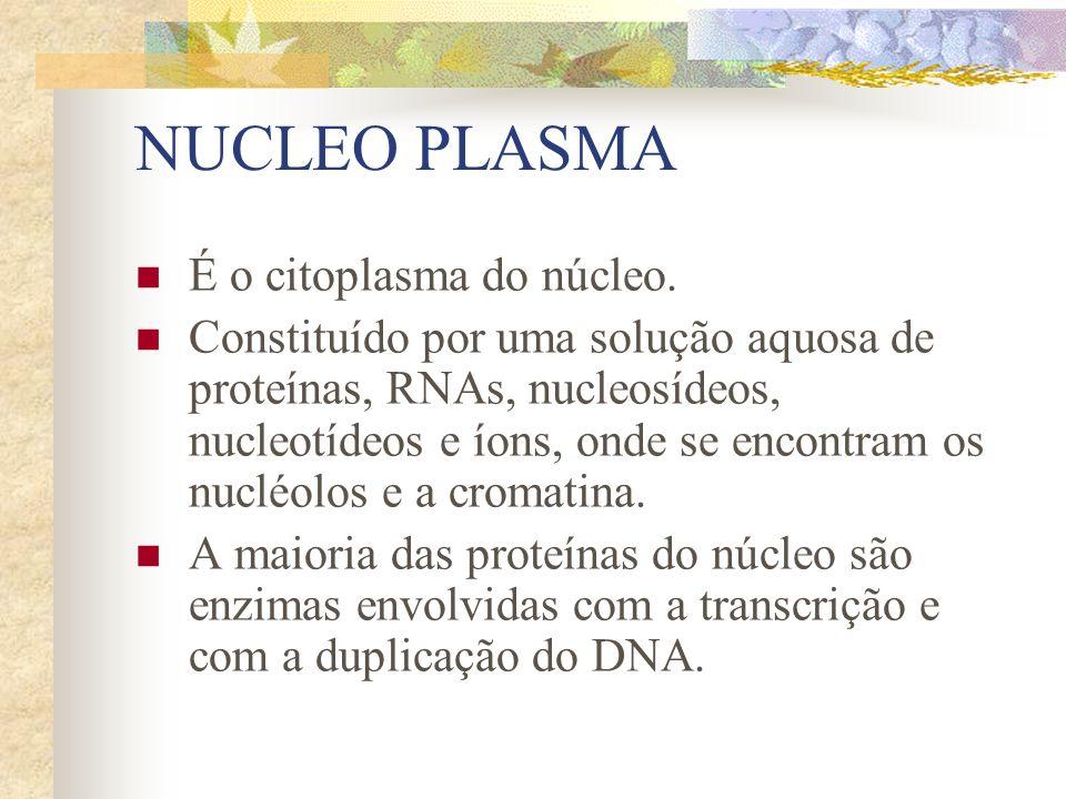 NUCLEO PLASMA É o citoplasma do núcleo.