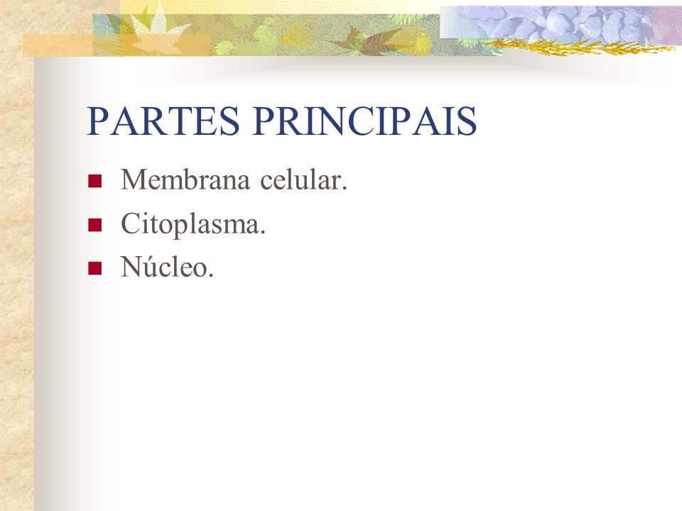PARTES PRINCIPAIS Membrana celular. Citoplasma. Núcleo.