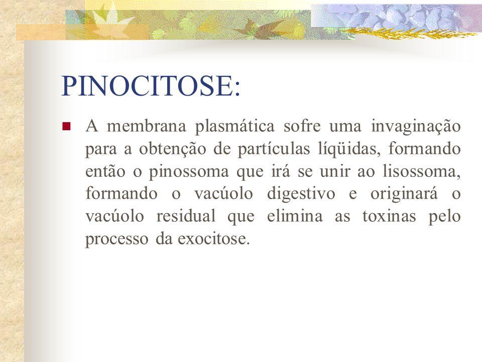 PINOCITOSE: